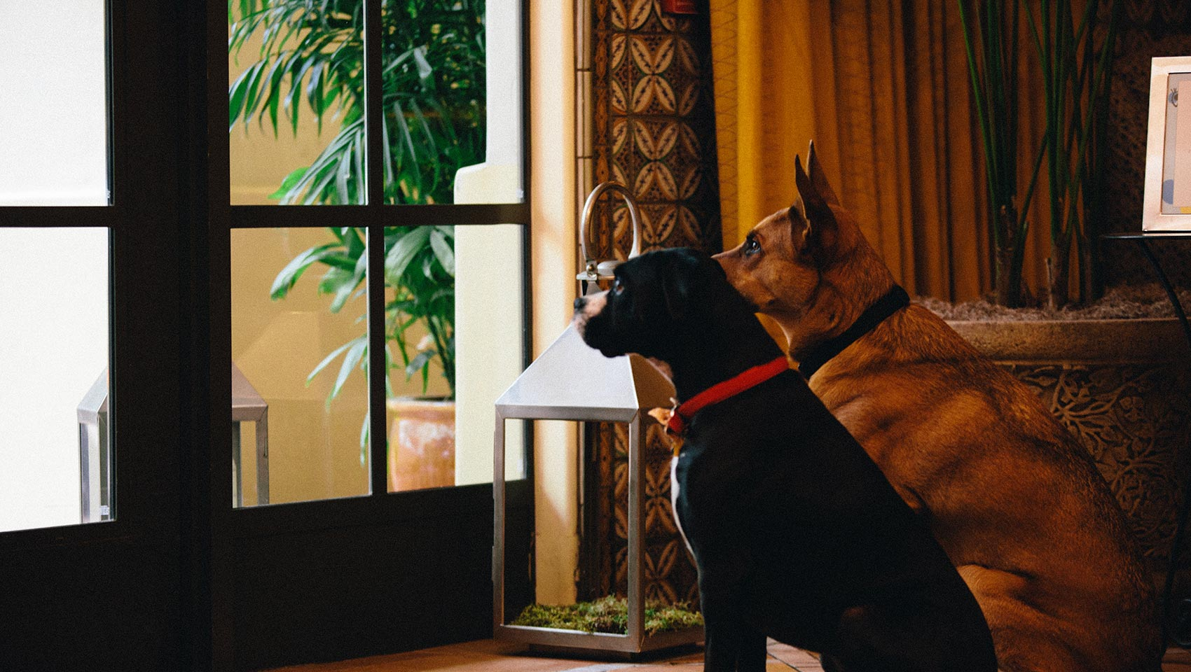Calling All Four Legged Friends Enjoy Our Pet Friendly Portland Hotel